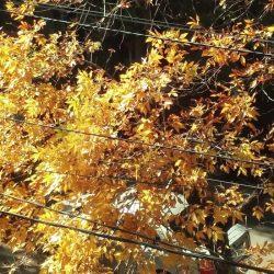 arbol-otoño